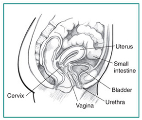 Oral and anl penetration